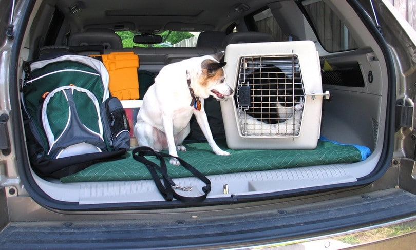 Pet evacuation during the hurricane