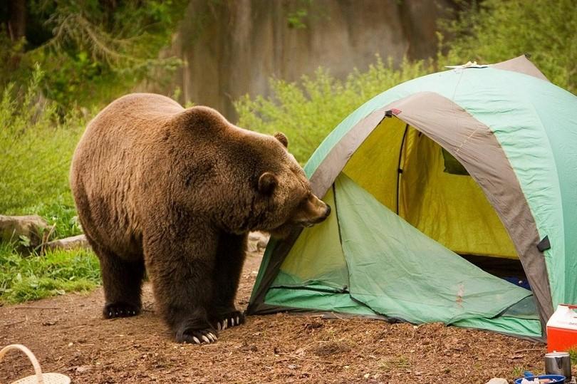 Bear at the shelter