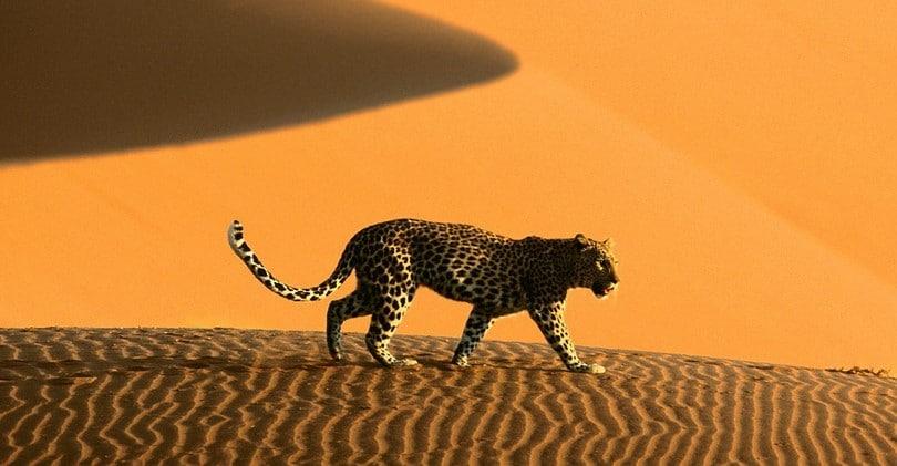 Danger in desert