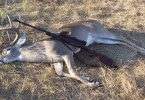 Deer rifle