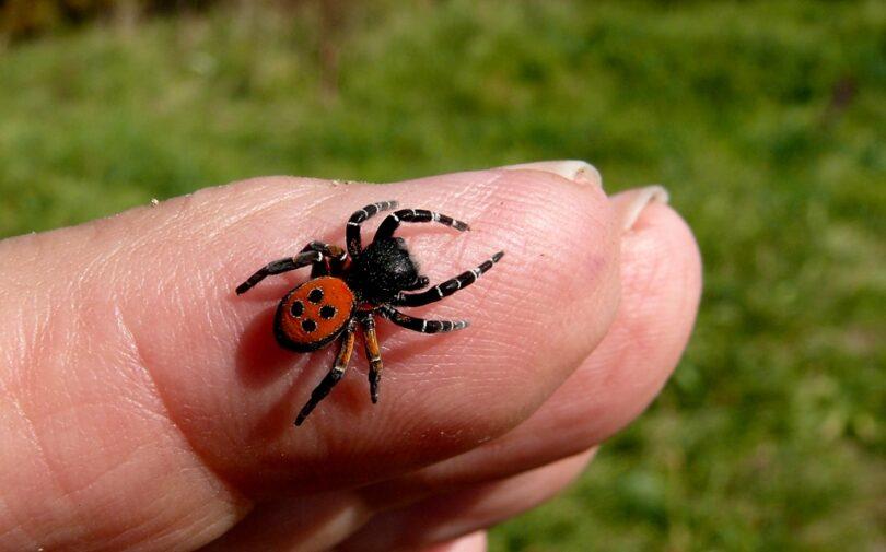 Spider Bites Treatment