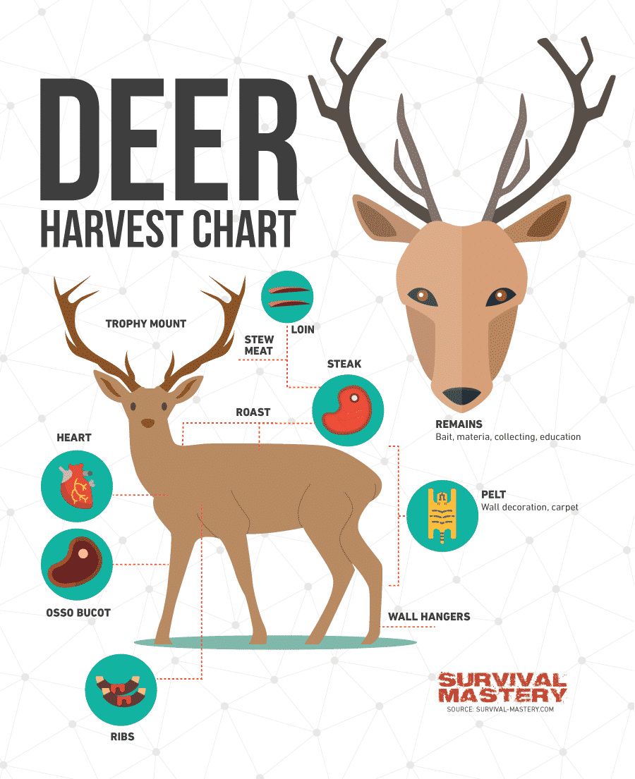 Deer Hunting Tips infographic