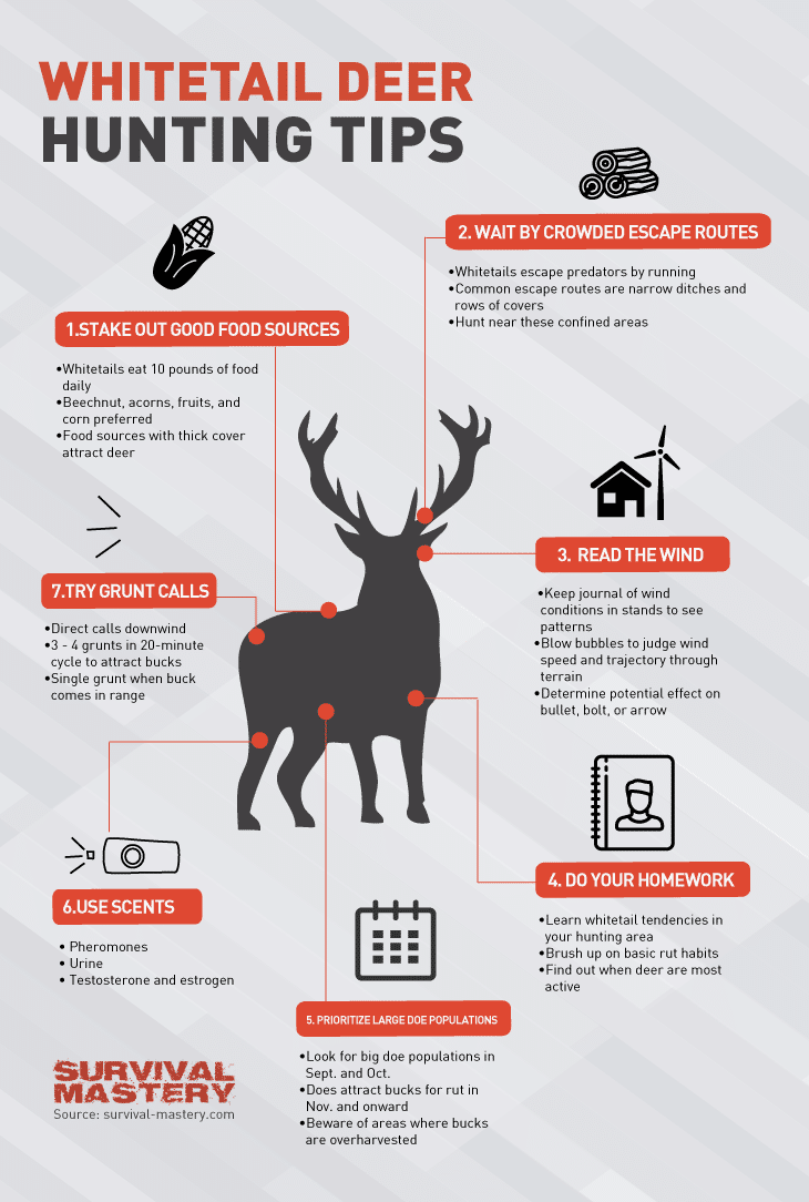Whitetail deer infographic