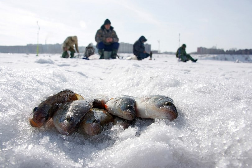 Fish on the snow and ice