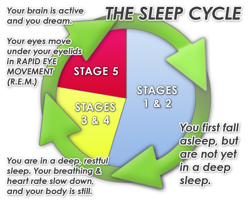 Sleep cycle graphic
