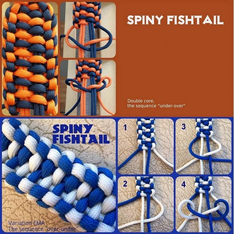 Spiny fishtail