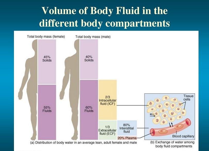 Volume of body fluid
