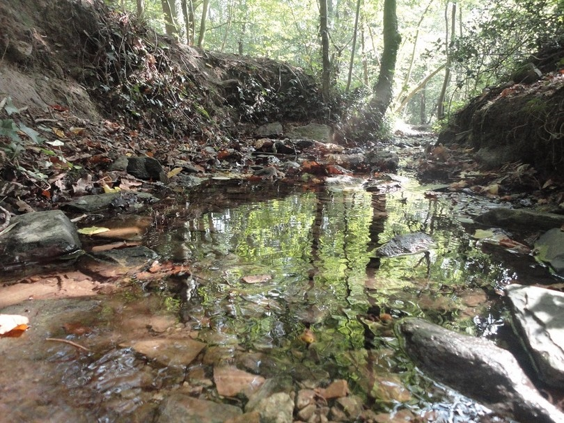 Wood stream