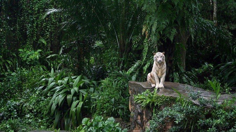 Animal predator in jungle
