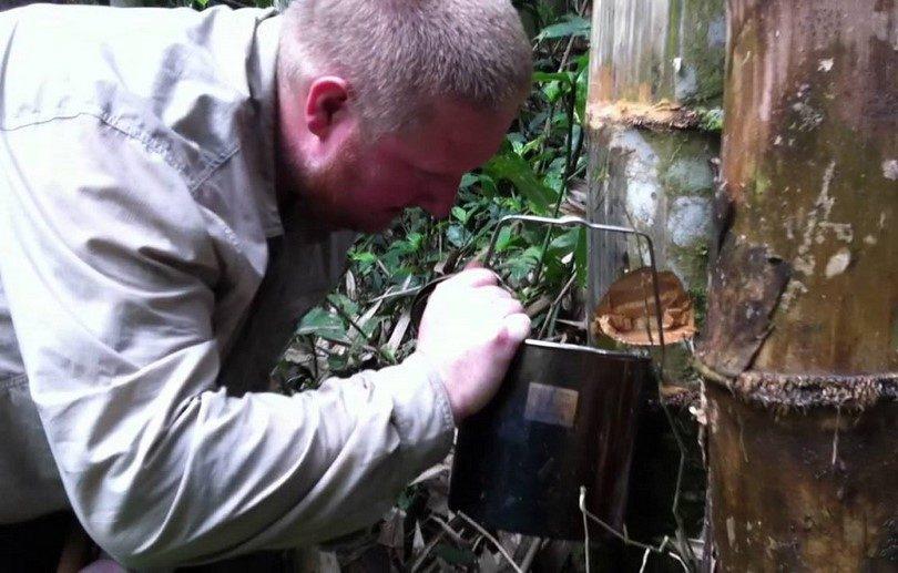 Find water in jungle