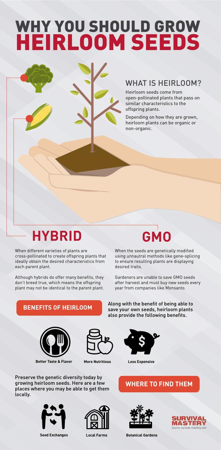 Heirloom seeds infographic