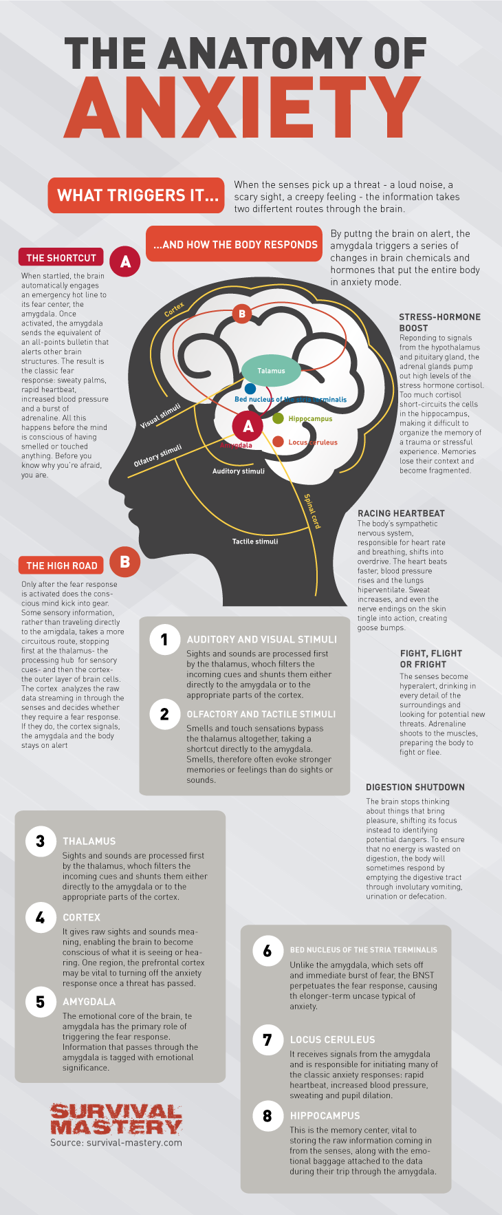 Anatomy of anxiety infographic