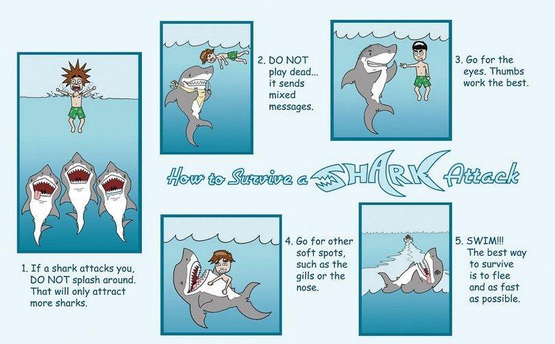 Survive_a_shark_attack
