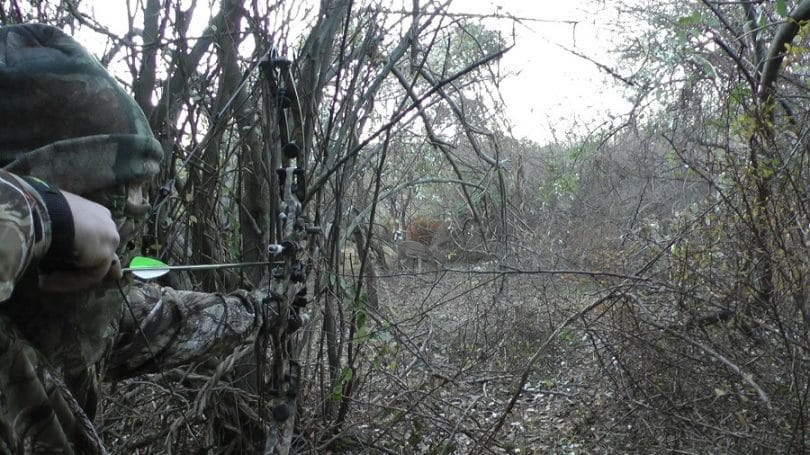 The bow for hunting