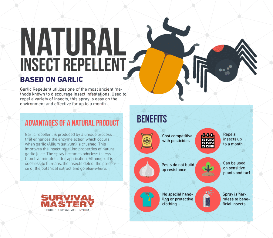 Natural insect repellent infographic