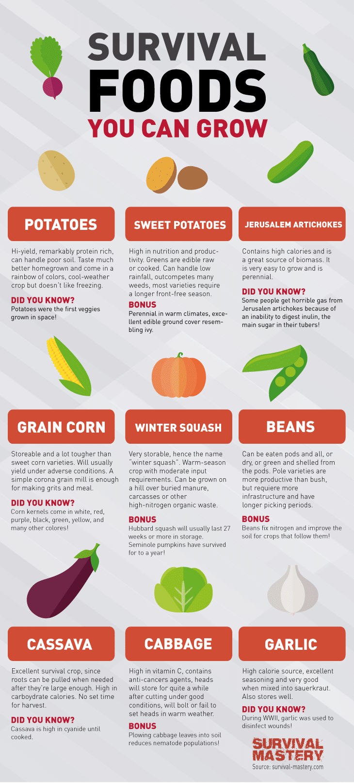 Survival food infographic