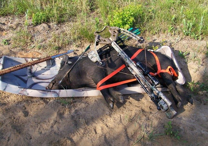 Crossbow for hunting