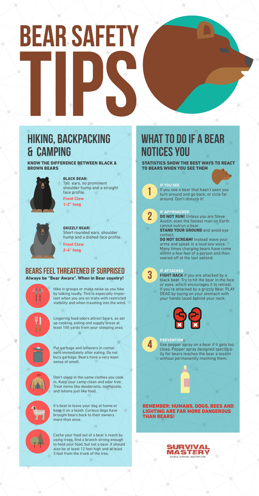 Bear safety tips infographic