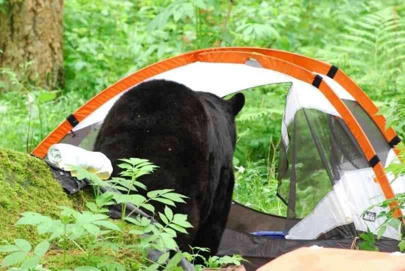 Beaware of bears