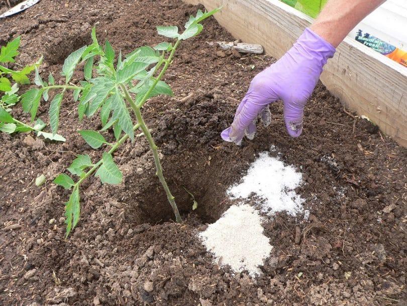 Epsom salt for garden