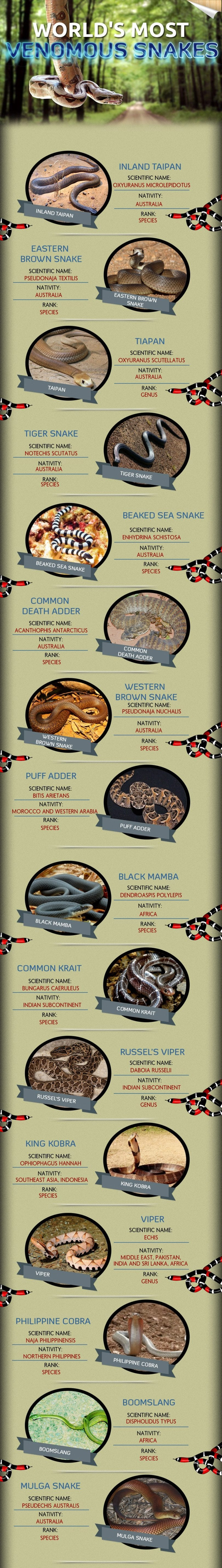 World's most venomous snakes