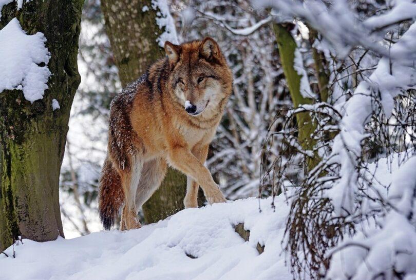 How to Avoid Wild Animal Attacks