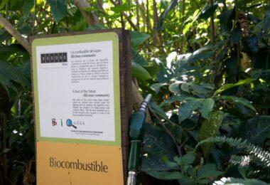 How to Make Biofuel