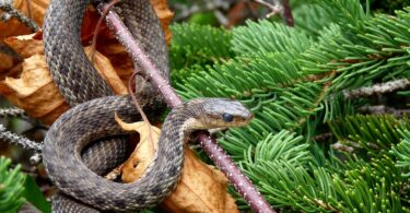 Most Poisonous Snakes in The World