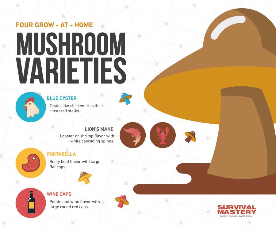 Mushrooms varieties infographic