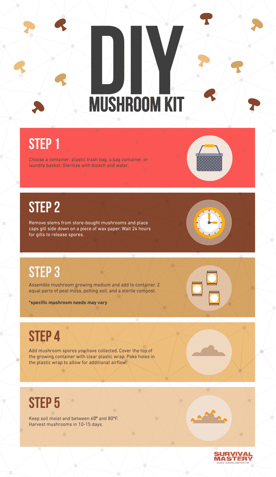 How to grow shrooms infographic