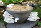 How to Grow Shrooms