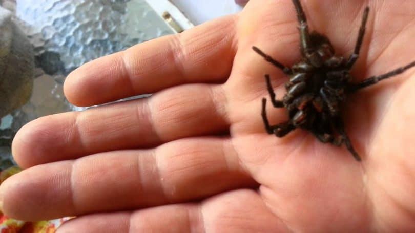 Capture the spider