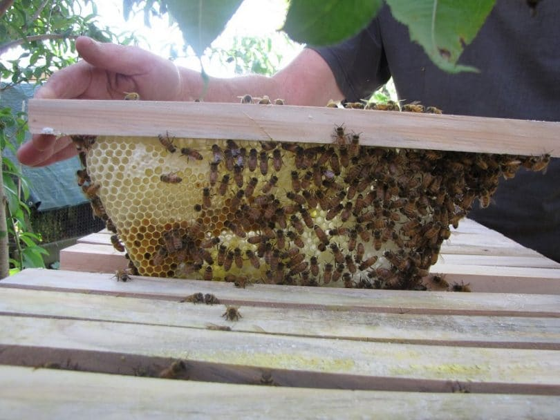Caring for your bees