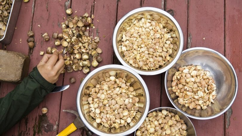 Dietary benefits of eating acorns