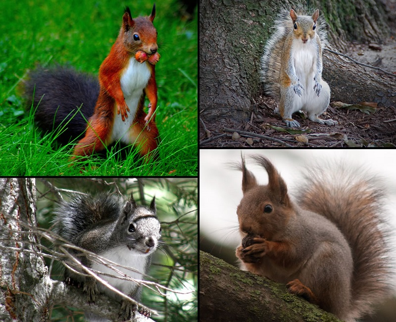 Different squirrels