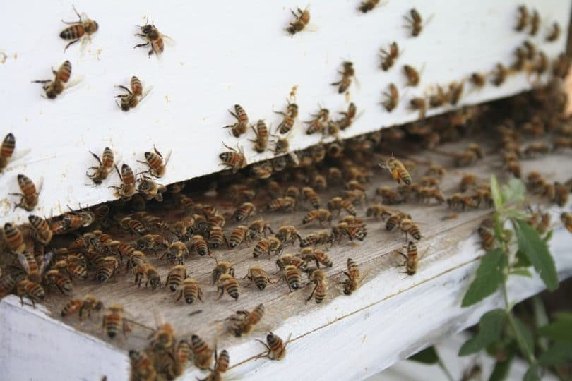 Getting your bees