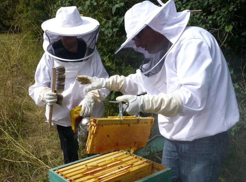 Honey harvesting with gear