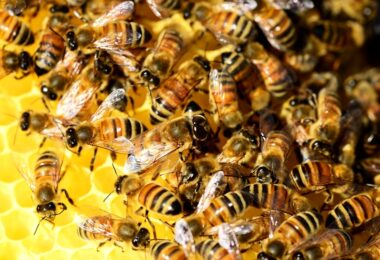 How To Raise Honey Bees