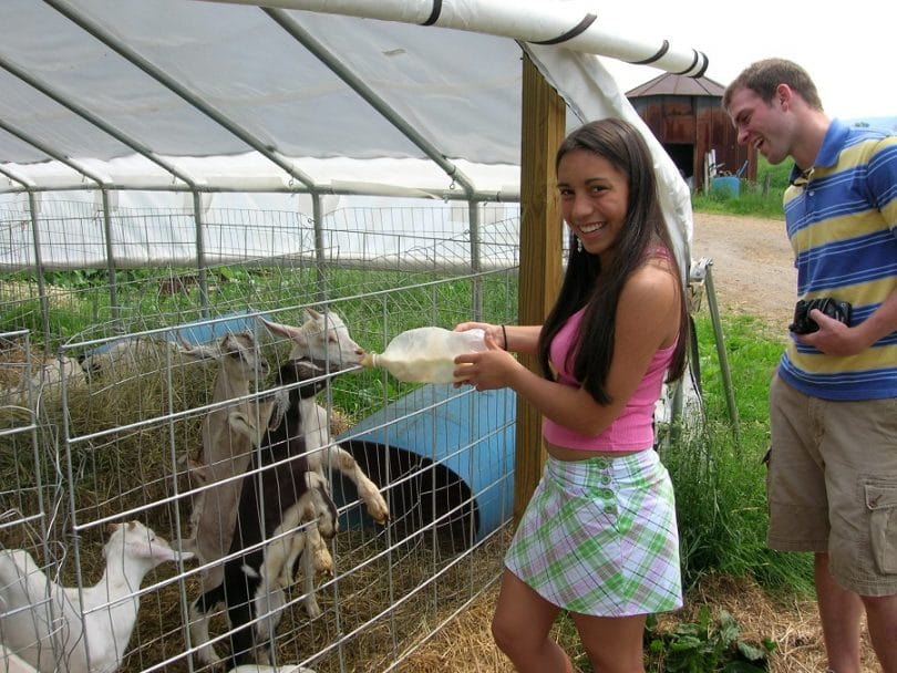 Raising milk goats