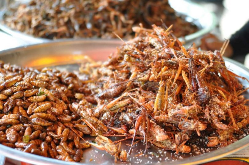 Insects for eating