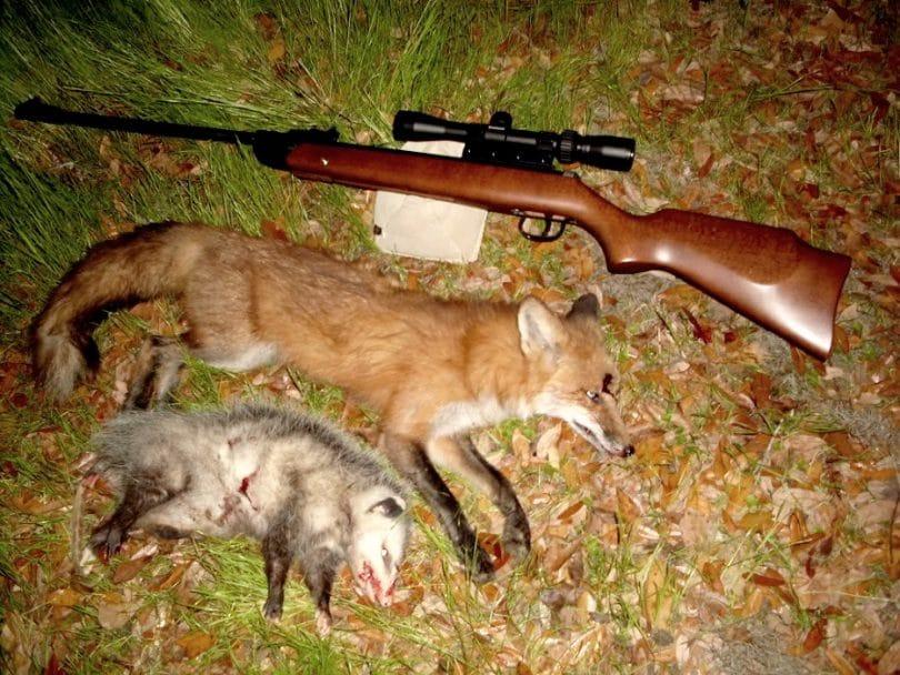 Types of varmint