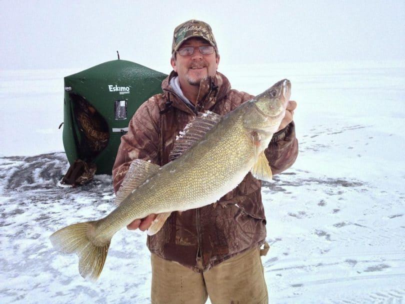 Walleye fish in winter