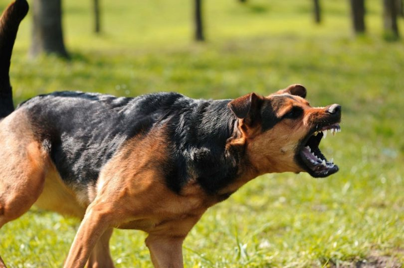 Aggresive dog barking