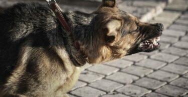 Dog Bite Treatment