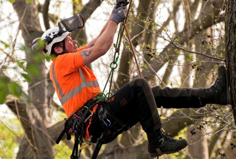 How To Climb A Tree.