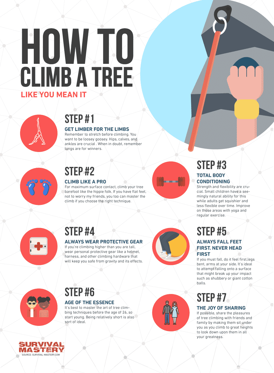 How to climb a tree infographic