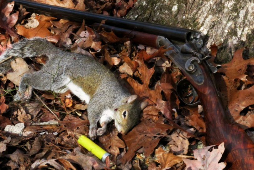 Squirrel Hunting Tips