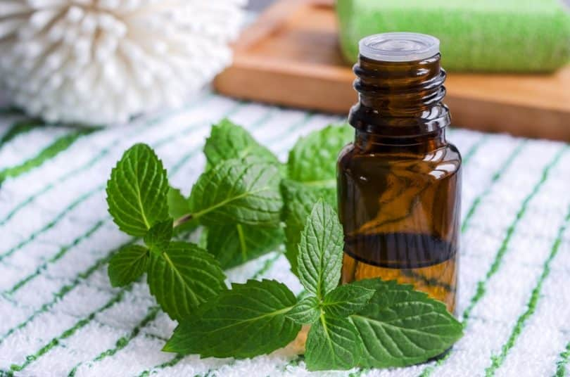 peppermint to get rid of nausea