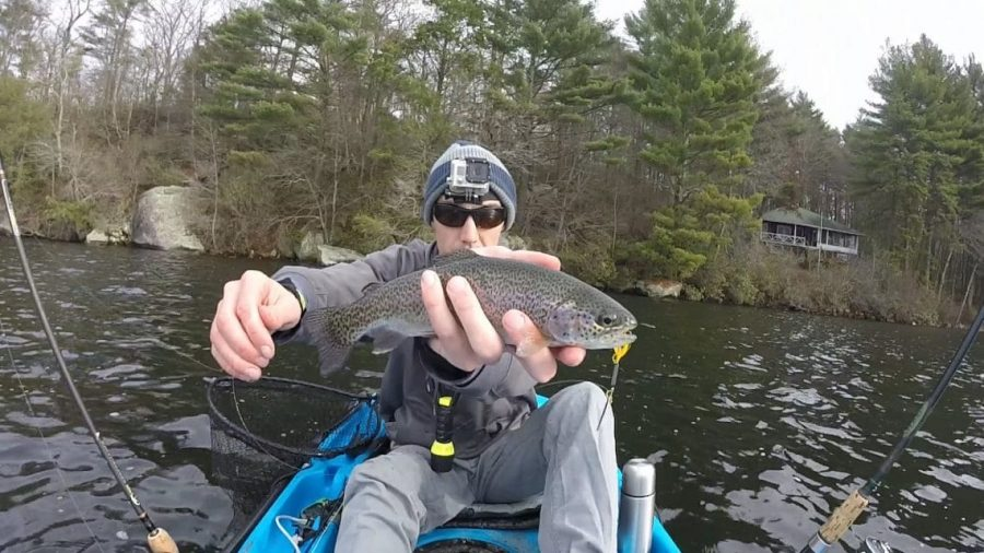 Rainbow trout in Stocked pond