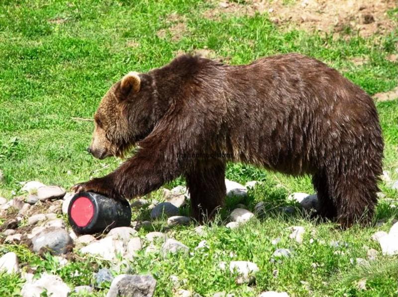 Bear and Bear Canister